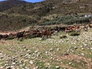 Når der løbes trailløb i Andalusien må du pludselig vige sporet for de fastboende