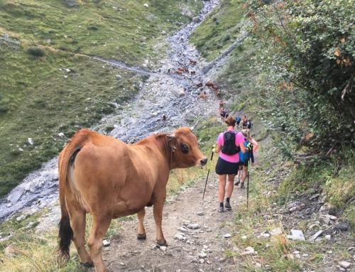 Ko bagfra ! En kommentar du kan møde når du bevæger dig rundt i alperne på de småstier – Rundt om Mont Blanc 2019